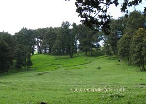 Gorsan near Auli
